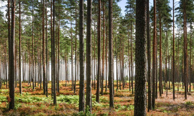 Die Bäume vor lauter Wald