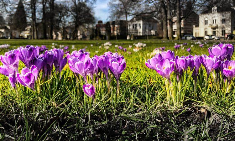 Ich will Frühling!